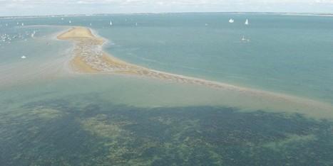L'Estuaire de la Gironde n'est plus « LEADER » - Royan Actu   SMIDDEST   Scoop.it