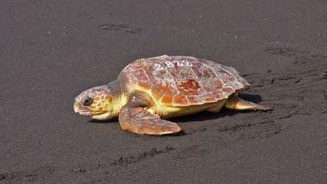 España tiene 150 especies animales en peligro de extinción: así se lucha por salvarlas - 20minutos.es | Agua | Scoop.it