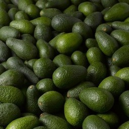 Mexico focuses on food safety to keep up avocado exports   Fresh Fruit Portal   Produce   Scoop.it