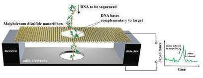 NIST suggests nanoscale electronic motion sensor as DNA sequencer | Amazing Science | Scoop.it