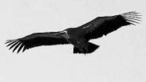 Más de 7.000 animales de especies amenzadas murieron envenenados la última década . Diario de Noticias de Navarra | Derecho medioambiental | Scoop.it