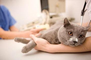 Home Pet Euthanasia – How to know If It's the Right Time? | Mobile Vet Service provides complete range of Veterinarian services at-home | Scoop.it