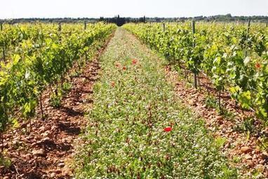 Les vignobles, refuges de biodiversité | Le Vin et + encore | Scoop.it
