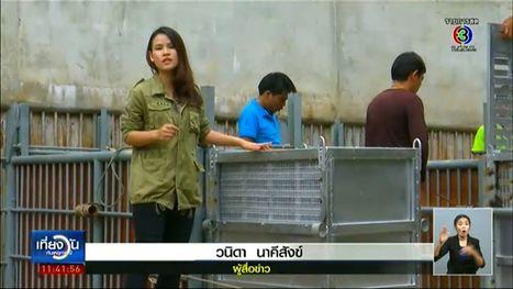 ซักซ้อมย้ายลิงอุรังอุตังเข้ากรงก่อนส่งกลับอินโดนีเซีย ข่าวสังคม - ครอบครัวข่าว3 | News : Special Report | Scoop.it