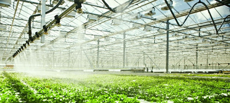 High Growth Potential In Greenhouse Irrigation System Offers Opportunities To Market Leaders In The Industry | Market Research | Scoop.it