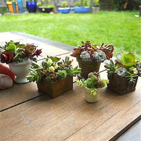 Container Gardening Ideas | Scoop.