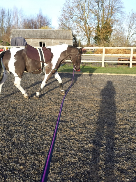 Dressage vs. Eventing | Horse shows | Scoop.it