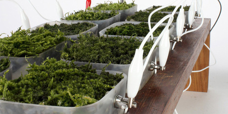 These Mad Scientists Want to Replace Solar Panels With Potted Plants | Sciences & Technology | Scoop.it