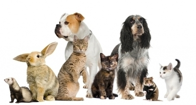 Howell Michigan Animal Hospital: Medical Center For Your Pet | beauty-lover | Scoop.it