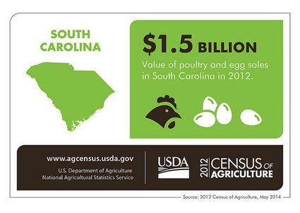 South Carolina Agriculture – Nothing Could Be Finer - USDA.gov (press release) (blog) | Agriculture | Scoop.it