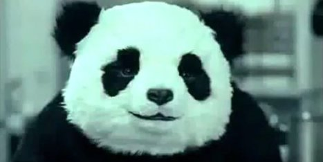 WATCH: In Case You Forgot, Panda Cheese Commercials Are Still Hilarious   Randoms...   Scoop.it