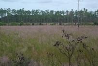 Everglades Habitat Images - Everglades National Park | Everglades Tour Guide | Scoop.it