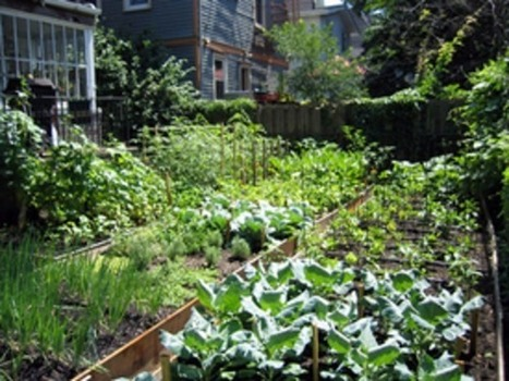 Is Decentralized Urban Farming the Future of food? | Decentralized food | Scoop.it