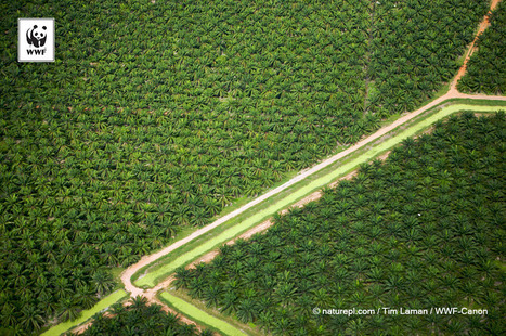 RSPO Next: the Next Step for Sustainable Palm Oil? - EcoLogical | Fair and sustainable economy | Scoop.it