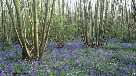 BSPP Meeting: Protecting our woodlands: tackling tree pests and diseases, University of Reading, 16 to 17 Sep 2013 | Forest Mycology and Pathology | Scoop.it