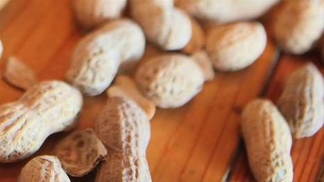 Peanut Allergies Could Be History By 2020 - Yahoo Health | Stress, Immunity & Resiliency | Scoop.it