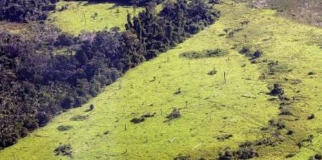 Les forêts régressent dangereusement à l'échelle mondiale | Biodiversité & Relations Homme - Nature - Environnement : Un Scoop.it du Muséum de Toulouse | Scoop.it
