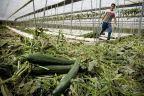 La moitié des communes bruxelloises utilisent des pesticides interdits - RTBF   Abeilles, intoxications et informations   Scoop.it