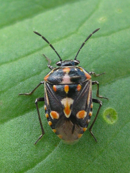 Update: New Pest & Disease Records (26 Dec 12) | Plant health | Scoop.it