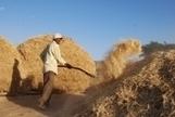 La période de prix agricoles élevés touche probablement à sa fin mais la vigilance reste de mise | PRODUITS AGRICOLES ET MARCHES - AGRICULTURAL PRODUCTS AND MARKETS | Scoop.it