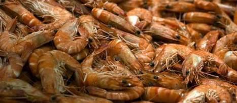 Nos crevettes industrielles sont... nourries par des esclaves | notre métier le commerce ! | Scoop.it