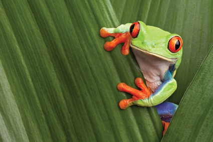 Strategic planning in pharma and avoiding frog soup - PMLiVE | PharmaChange | Scoop.it