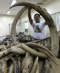 Charging China demand drives deadly ivory trade | Kruger & African Wildlife | Scoop.it