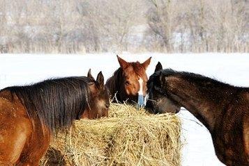 Horses Require Extra Attention when Temperatures Plummet. | GHPhorses | Scoop.it