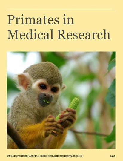 Primates in Medical Research – Free Literature   Animals R Us   Scoop.it