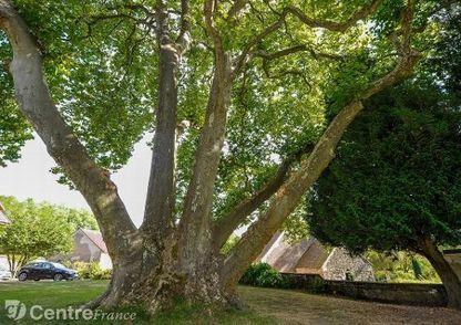 Ces arbres de la Nièvre remarquables pour leur taille, leur longévité ou leur environnement | Revue de presse du CAUE de la Nièvre | Scoop.it