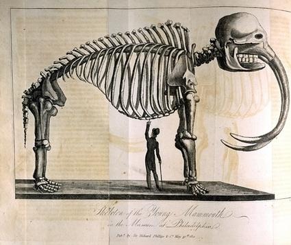 Les mammouths laineux | Aux origines | Scoop.it