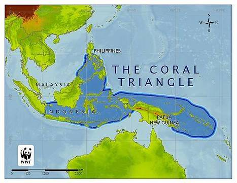 As destructive fishing declines, pollution and other threats to PHL coral reefs rise | Water Stewardship | Scoop.it