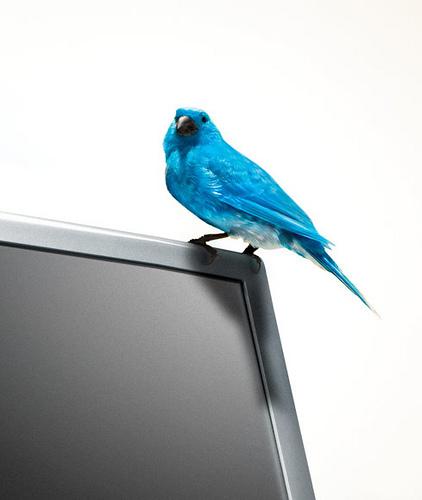 Ten Twitter Tips for Teachers | The Whiteboard Blog | New Digital Media | Scoop.it