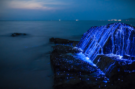 "Bioluminescent Shrimp Turn Rocks on Japanese Beach Into ""Weeping Stones"" 