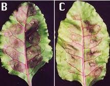 El estrés vegetal: el impacto negativo de un entorno inadecuado en las plantas | Ecología y Sostenibilidad | Scoop.it