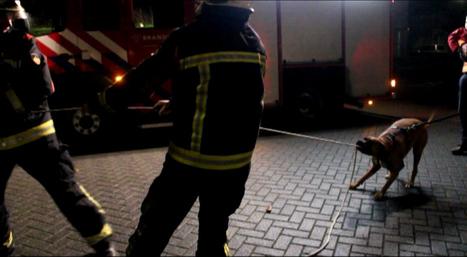 Omroep Gelderland - Nieuws - Hond helpt brandweer in Harderwijk | cazanshondencentrum | Scoop.it