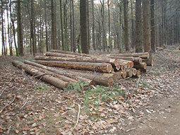 Vers une filière « Bois-Bûche » dans les Hautes-Pyrénées - [TARBES INFOS] | Vallée d'Aure - Pyrénées | Scoop.it
