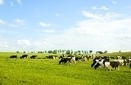 Powering Up with Centralized Biodigesters for Dairy Farms | Sustain Our Earth | Scoop.it