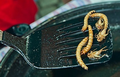 Edible Insects: The Next Protein Trend? | Vitacost.com Blog | Entomophagy: Edible Insects and the Future of Food | Scoop.it