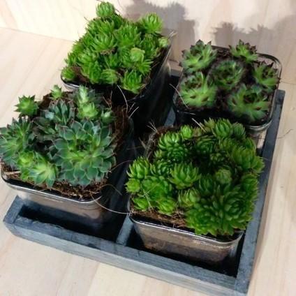 La tienda online de Artesaniaflorae | Artesanía vegetal y arte floral | artesaniaflorae | Scoop.it