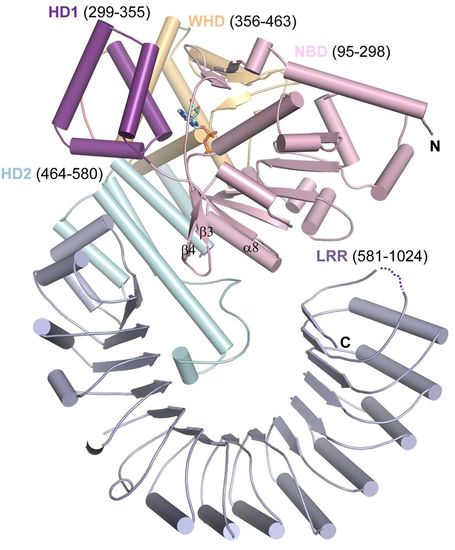 Science: Crystal Structure of NLRC4 Reveals Its Autoinhibition Mechanism (2013) | Plant-Microbe Interaction | Scoop.it
