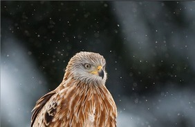 Beauty Of Nature: 100 Brilliant Examples Of Bird Photography   All about nature   Scoop.it