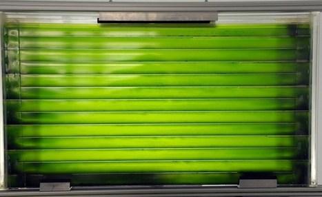 Des algues sur les tours à Paris? Une start-up française y croit | du village autonome... | Scoop.it