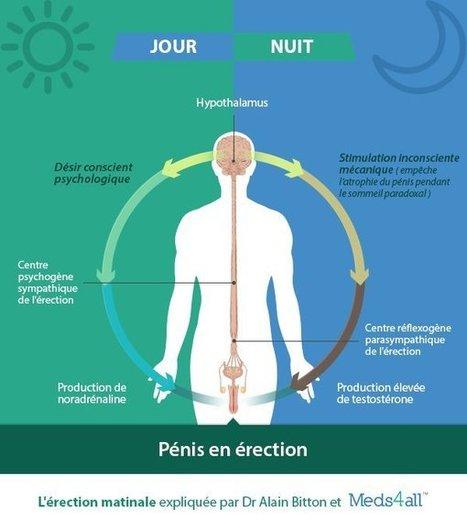 L'érection matinale, comment ça marche ? | Sexualité | Scoop.it