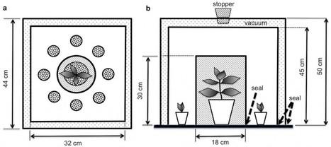 Les plantes entendent-elles ? | Veille Scientifique Agroalimentaire - Agronomie | Scoop.it