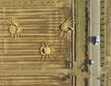Farmers Create Giant Crabs Made of Straw to Spread Awareness About Air Pollution | #Design | Scoop.it