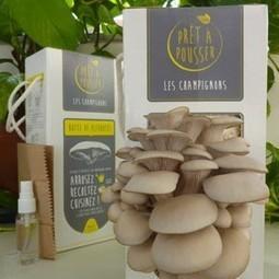Agriculture urbaine : Des champignons sur du marc de café, futur bonheur des chefs étoilés   Planète Paléo   Scoop.it