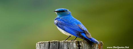 Cute Bird | Facebook Cover Photos | Scoop.it