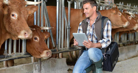 Silent Herdsman équipe les vaches de colliers connectés | L'Atelier: Disruptive innovation | TDM : Total Digital Management | Scoop.it