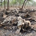 Africa's devastating elephant-poaching problem | Wildlife Trafficking: Who Does it? Allows it? | Scoop.it